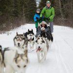 Des vacances en traîneau à chiens au Canada