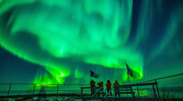 Des ours polaires et plus encore à Churchill, au Manitoba